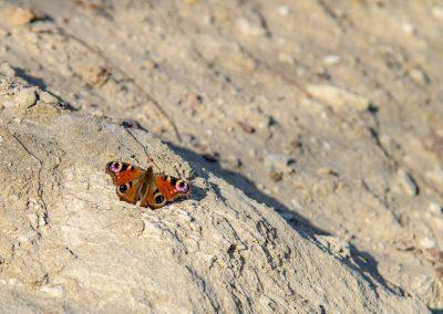 Malé jarné objavovanie – Piesková baňa v Príbelciach