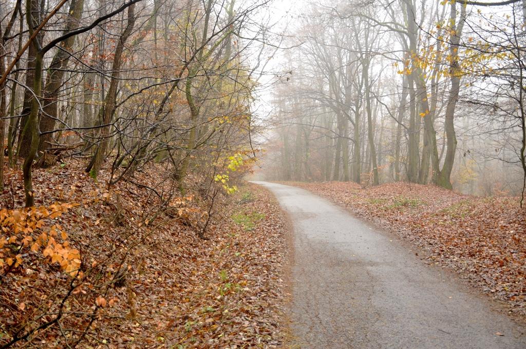 Prechádzka na Kačín bratislavským lesoparkom